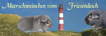 Rassemeerschweinchen Zucht mit Herz. Vom Friesendeich seit 1984, beständig und kompetent.